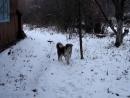 Клёпа в бегает по снегу