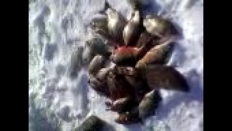 сегодня поймали 9 кг карпа и 5 кг карасей