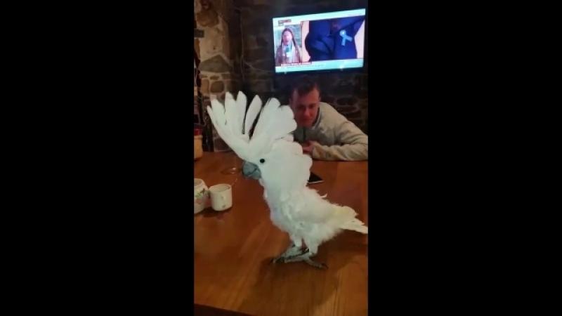 Ржачный попугай танцевал под музыку деспасито! 😂😂