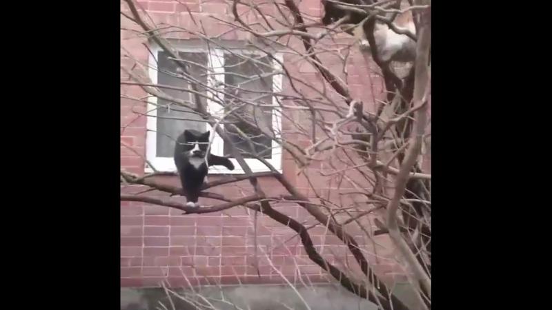 НАБЛЮДАЙ | Весна! Коты прилетели! 😀👍 @ pani_yulcha