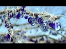 Новый клип Йишил Юджесой Почему