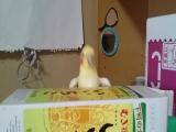 Обдолбанный попугай возомнил себя барабнщиком и ебашит спидовый рок