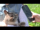 История одной кошки