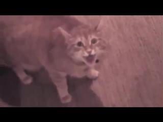 Злои кот загнал гостя хозяина в ванную