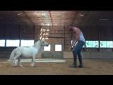 pony play-date