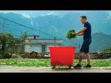 Фэн Хуан Дань Цун. Плантации. Как заваривать чай по-гуаньдунски. 200 летний одинокий куст