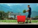Фэн Хуан Дань Цун. Плантации. Как заваривать чай по-гуандунски. 200 летний одинокий куст