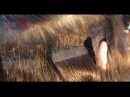 Коррекция наращенных прядей HAIR TALK Обучающее видео