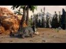 Films from DinoPark Triceratops