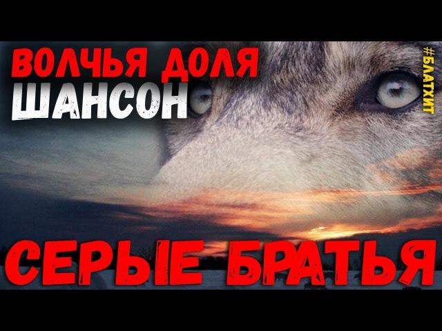 Волчья Доля. Сборник шансона о волках. Серые братья 2018