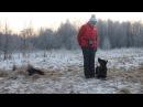 Контакт дрессировщика и собаки