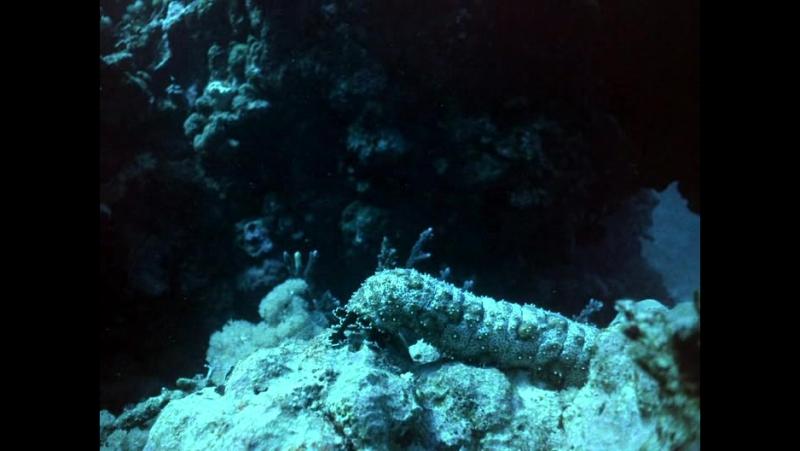 Подводная Одиссея команды Жака Кусто (Мир без солнца) / Jacques Cousteau: World Without Sun (Le monde sans soleil) / 1964