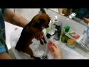 Собаке моют лапы