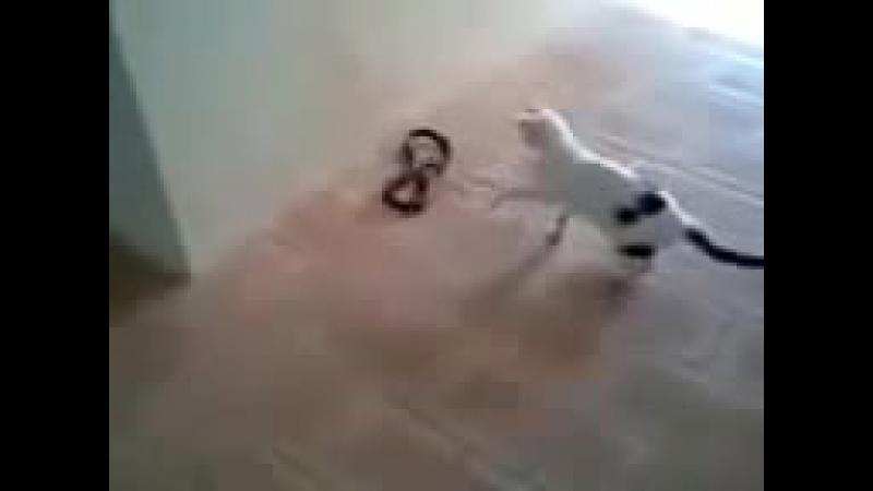 Кот против гадюки, невероятная манёвренность кота