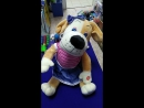 поющая собака svk/toys_krabs