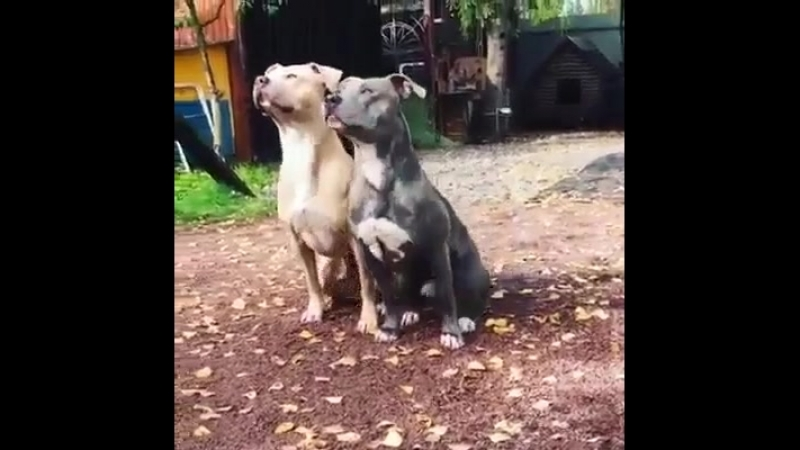 Когда ты с другом на одной волне.