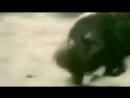 мега прикол, обезьяны убегают на кабане, неуловимые мстители_Full-HD.mp4