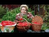 Супер ягода для здоровья Калина красная