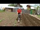 Первое окучивание картофеля ЛЕГКО, БЫСТРО, УДОБНО. Как окучить картофель без особых усилий.