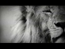 Laurent Baheux La savane en plein coeur Savannah in the heart