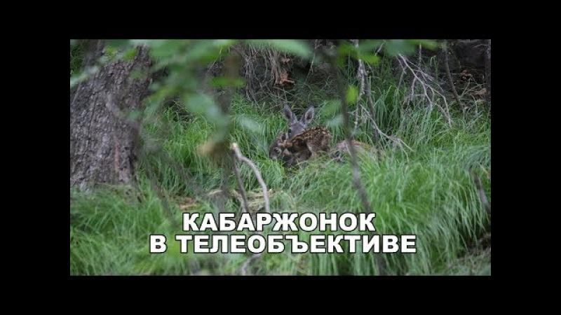КАБАРЖОНОК В ТЕЛЕОБЪЕКТИВЕ