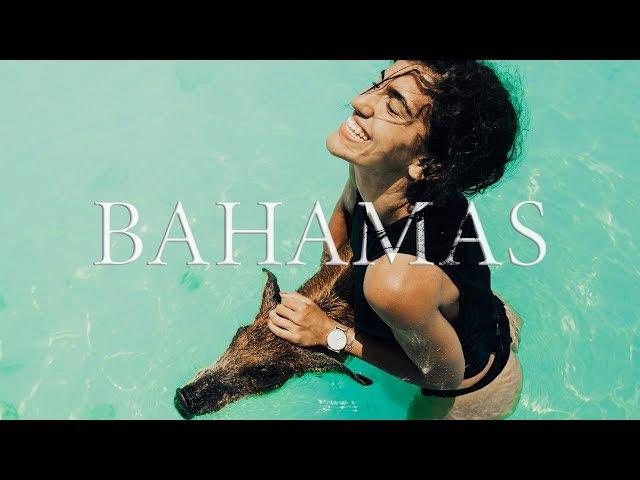 Багамы. Океан с акулами. Я и свинья.