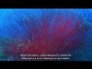 Чудеса голубой планеты Семь континентов 1 Азия Познавательный природа путешествие 2011