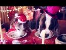 Самое прикольное поздравление с Новым годом жёлтой собаки ! - YouTube (720p)