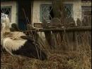 Чернобыльские джунгли. 20 лет без человека... Часть 6 Белые аисты зоны