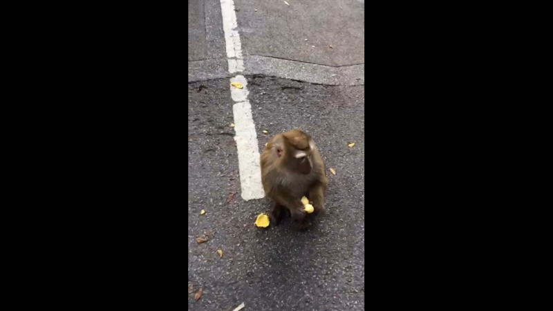 Кормление обезьян в Тайланде