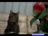 случайные видео с котиком про руку палец и яйца