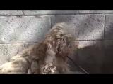 Собака бывает кусачей Только от жизни собачьей Ю. П. Мориц