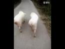 Две подруги идут на дискотеку
