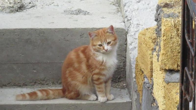 Котик Зозу