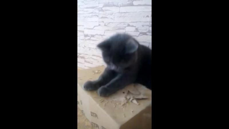 Cat vs box v1.1