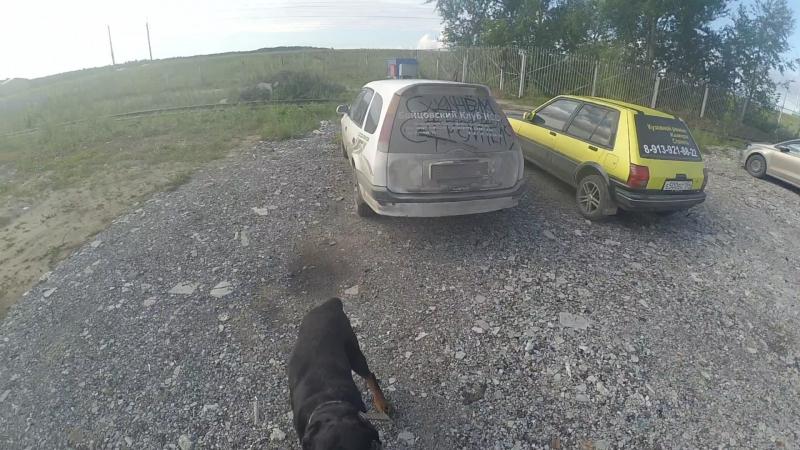 Видеоинструкция. как правильно пользоваться в условиях города автомобилем, собакой, физкультурой, переходом с кнопкой, аптекой