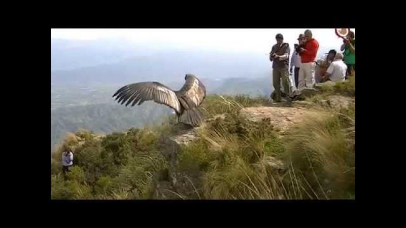 Liberation Condor