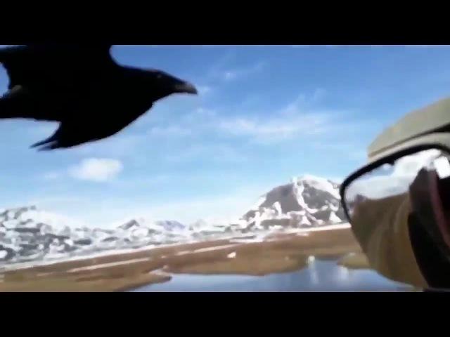 Дальнобойщик кормит ворона с руки!