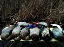 Охота на утку на раскатах