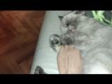 секс порно с кошкой задорно угар СО асмр  с кошкой