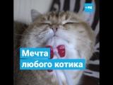 Массажёр для котиков