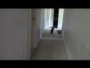 CatDad Feeds His Kitties In Cat Mask Fail- -Original Video-