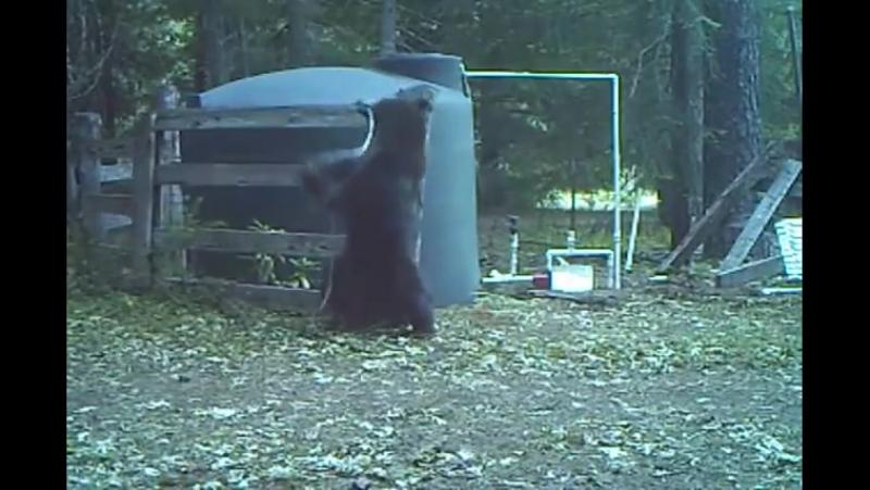 ~ А вы видели как медведь получил по яйцам ~
