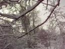 Удивительное дерево . Читает автор Валентина Карпушина-Артегова.
