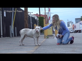 Homeless and abused, this Pit Bull didnt lose HOPE that something amazing will