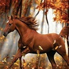 ~Красивые картинки(только с лошадьми)~