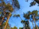 Пошла в лес и всех вас зову- не сидите у компов.Нидерланды - лес в феврале .