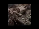 Малышева жжОт - Я пукаю не только попой ц coub (720p)(0).mp4