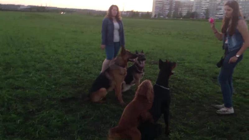 Вероника и команда