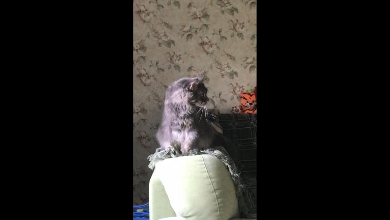 У кого кот Баюн а у нас кот топтун